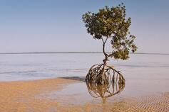 Tree in sand and water against blue sky