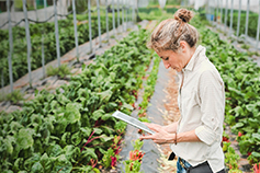 Lady with tablet standing in vegetable garden