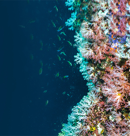 Deep sea view of small fishes and plants