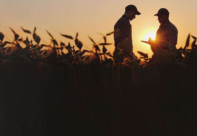 Two farmers talking on the field