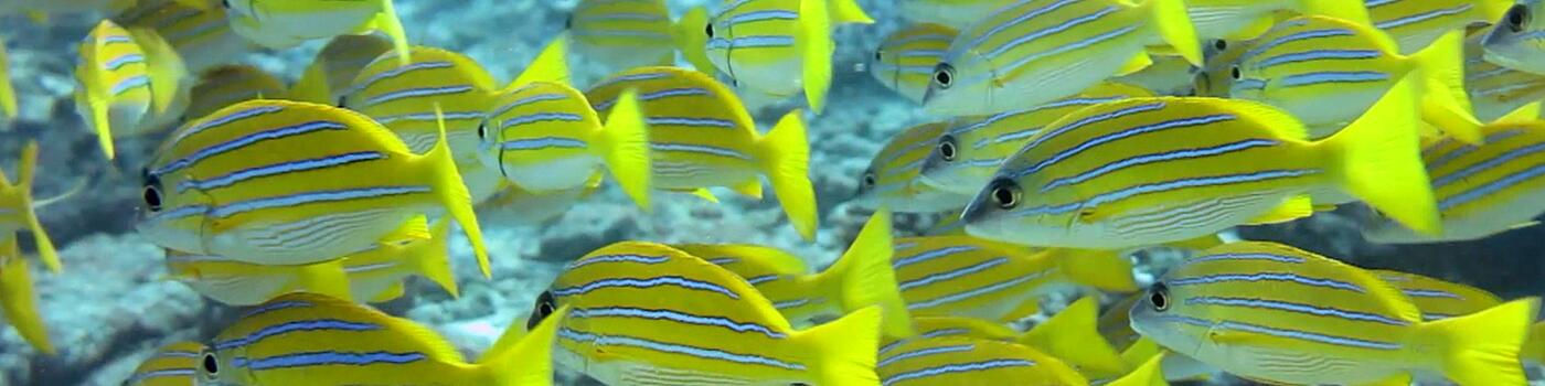 Close-up of yellow fish in the ocean