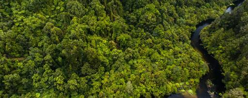 Aerial view lake in green forest