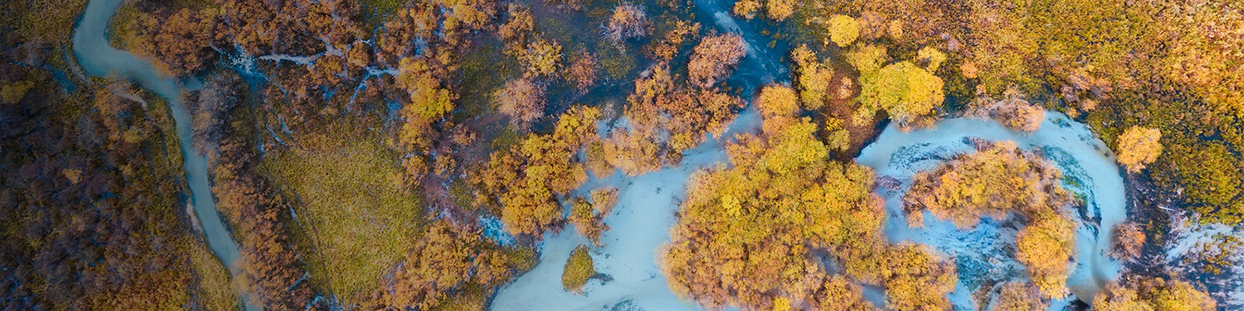 Aerial view of multicolored autumn