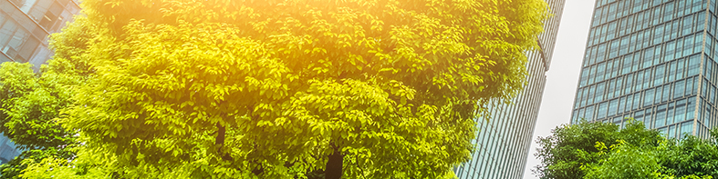 Trees with sun