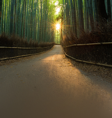 Road amidst a forest