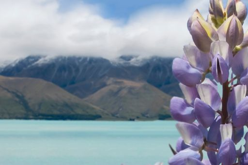 Making tax digital: Spring update, Image of flower in front of lake