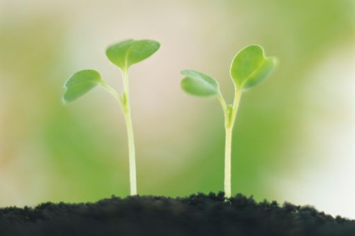 Seedling growing in the ground