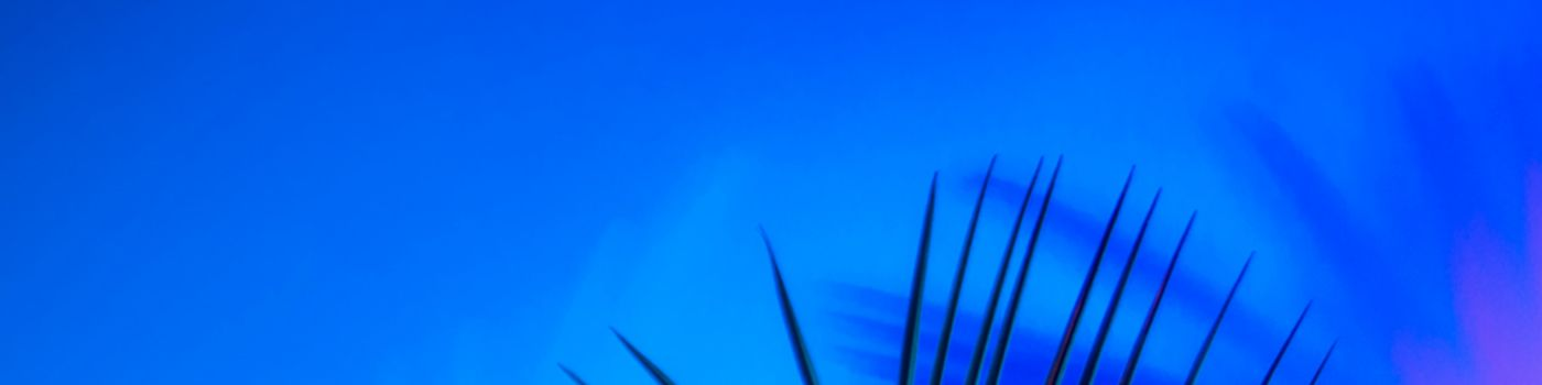Blue and pink palm fronds