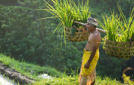 Asian man holding baskets of grass in mountain fields