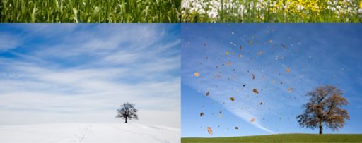 KPMG IFRS effective dates topic image: a tree shown in four different seasons.