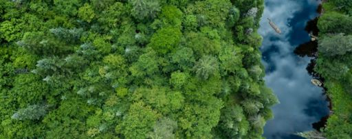 top view forest and river