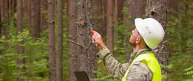 Man surveying trees and taking notes
