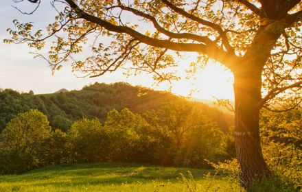 Sun setting behind hills highlighting tree