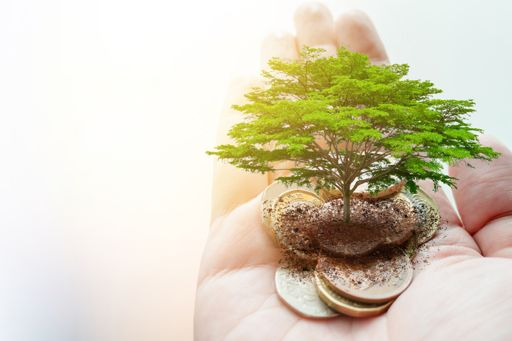 hand holding coins with mini tree representing environmental taxes