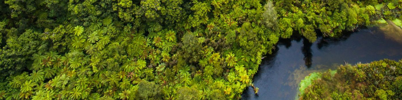 Aerial view of forests