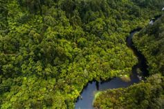 Aerial view of a lake in green forest