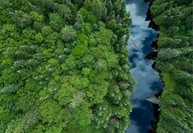 Aerial view of Boreal nature forest and river