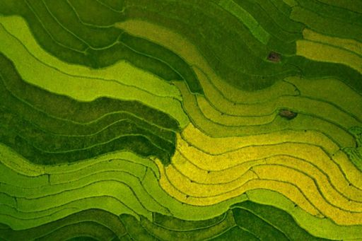 Sustainable rice field in Asia