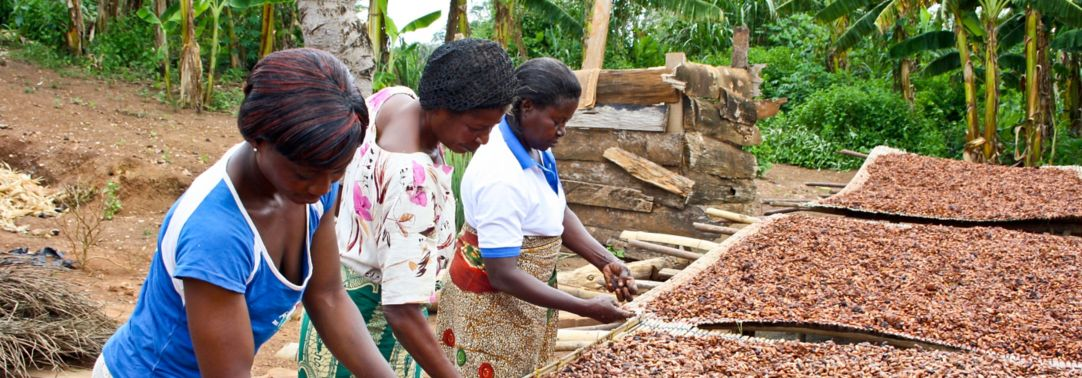 african women plucking cocoa