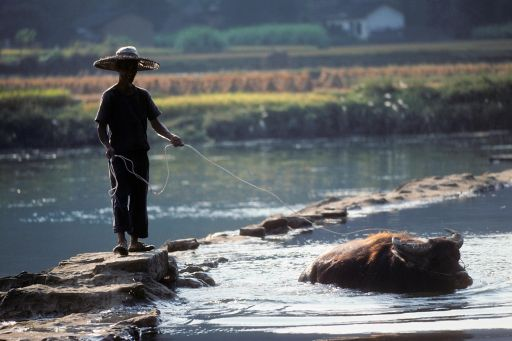 Man on river with ox