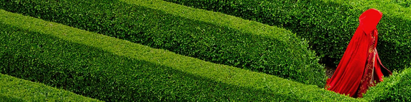 Navigating the family business succession maze