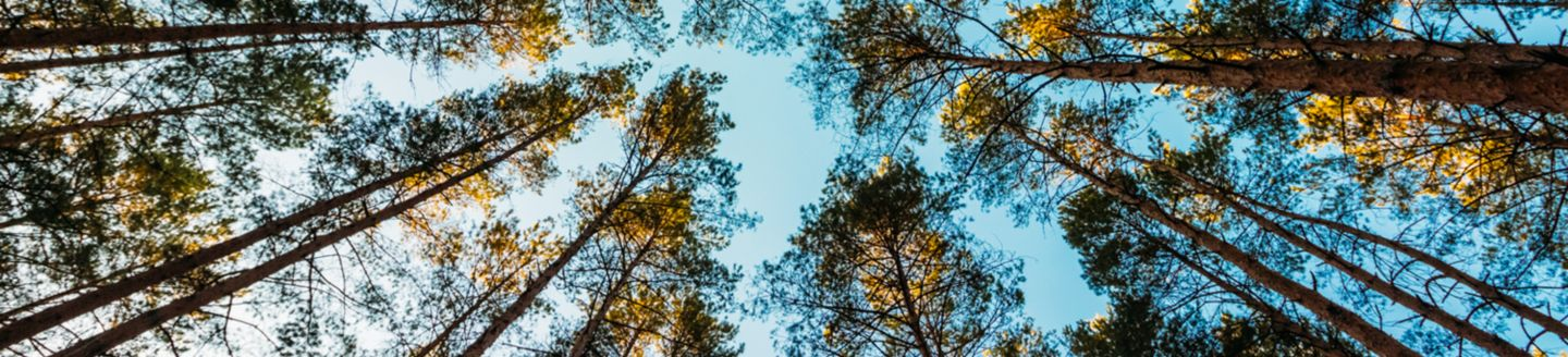 Bottom view of tree cluster against blue sky