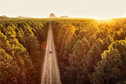 Road through forest at sunset