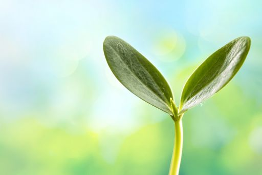 Close up of plant seedling on a blurred background