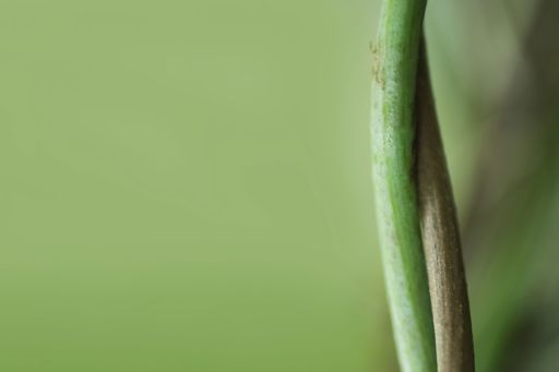 two stems together