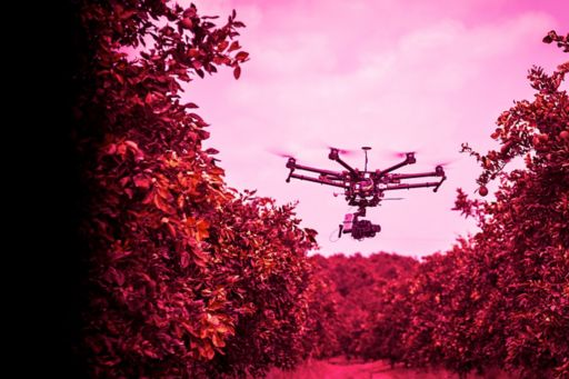 Drone flying in row of a fruit tree farm