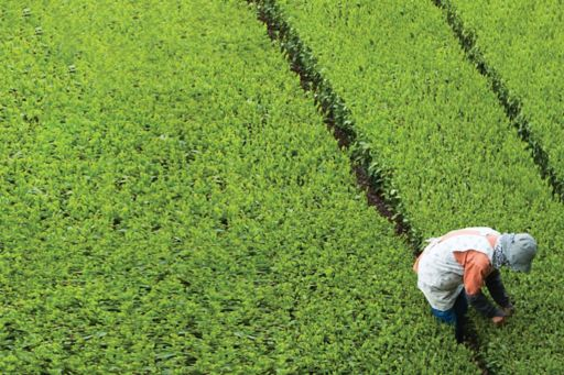 The Growth Promise Indicators – 2019 report - photo of a farmer in a field