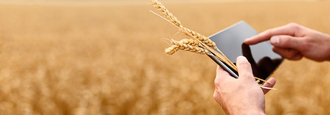 Farmer with digital a tablet in wheat field using modern technologies in agriculture