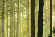 transforming compliance - trees