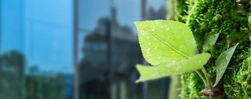 Green leaf of sapling against glass building