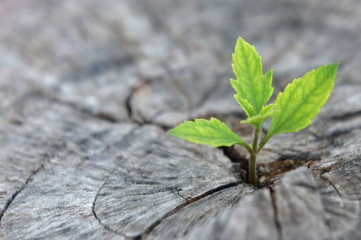 Green plant coming out of ground