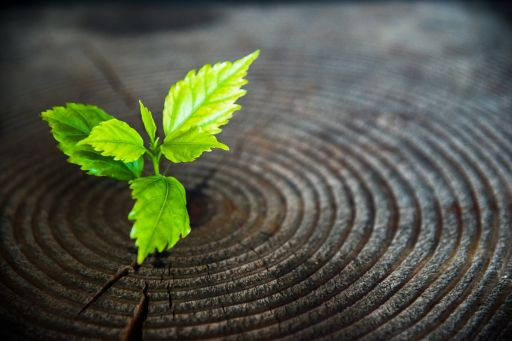 green plant seedling grow from old tree stump