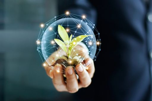 hand with coins and sprout