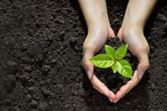 Hands holding a green sapling on dark soil