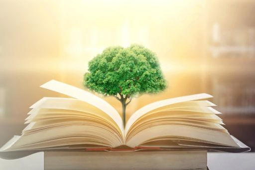 Tree growing out of law book