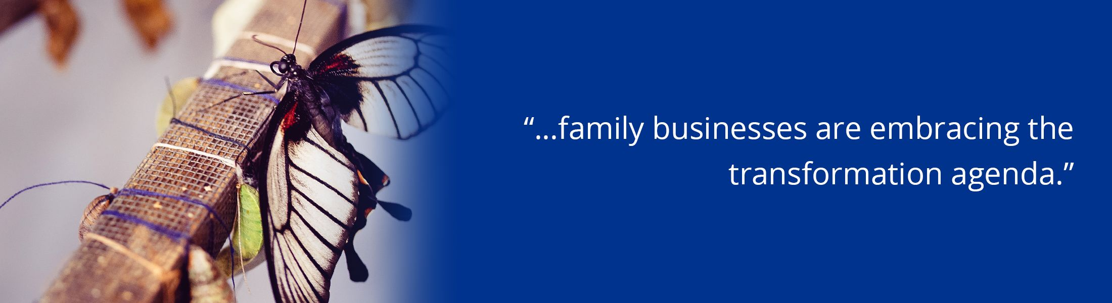 """overlaid text """"family businesses are embracing the transformation agenda"""""""