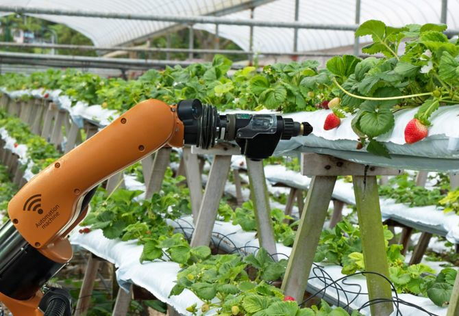 Robot spraying strawberries