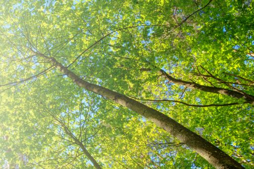 Green trees reaching into sky