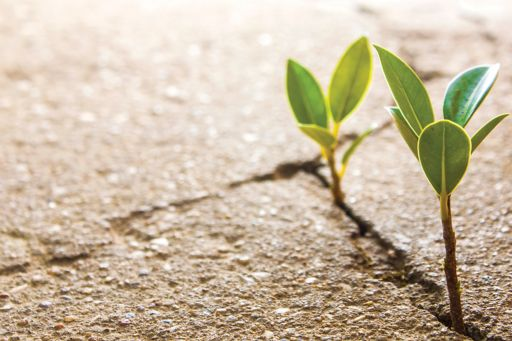 Two plants growing in cement