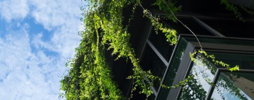 Plants hanging from terrace