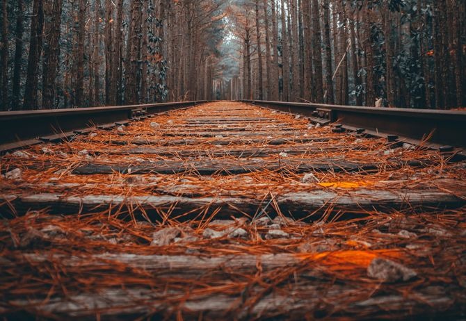 Railway tracks through dense forest