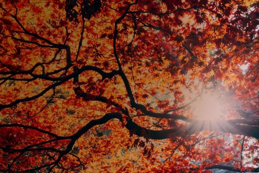 The numbers that are changing the world - rays through trees
