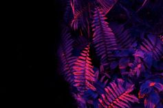 Red and purple leaves on a black background