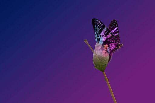 Colourful gradient with butterfly
