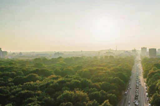 Road among trees leading to a city