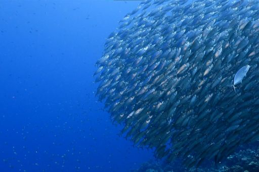 Fishes moving in same direction under deep blue sea
